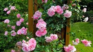 zahrada5